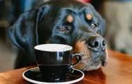 پت کافه و کافه نبات در پرشین پت