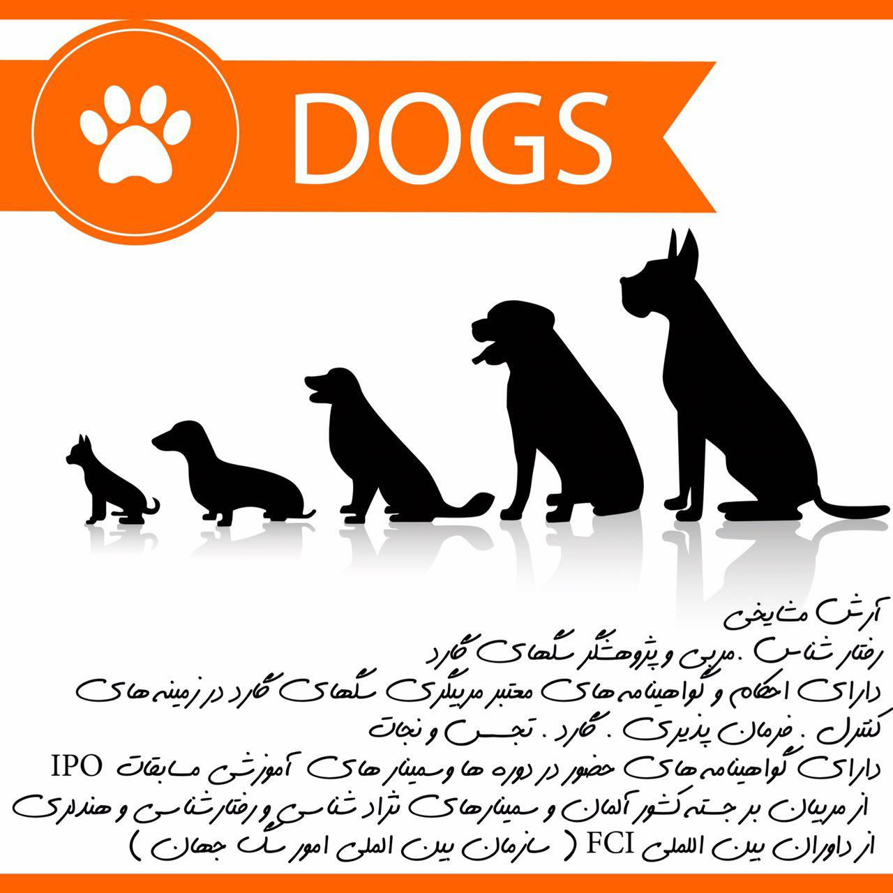 حضور برترین مربی تربیت سگ در ایران