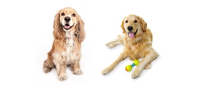 محصولات برای حیوانات حمایتی در پرشین پت