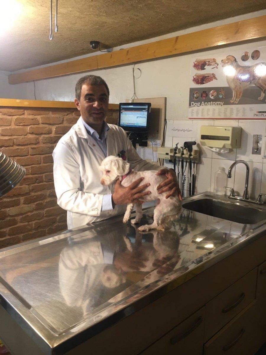 رای ما دکتر محبی برای همه حیوانات